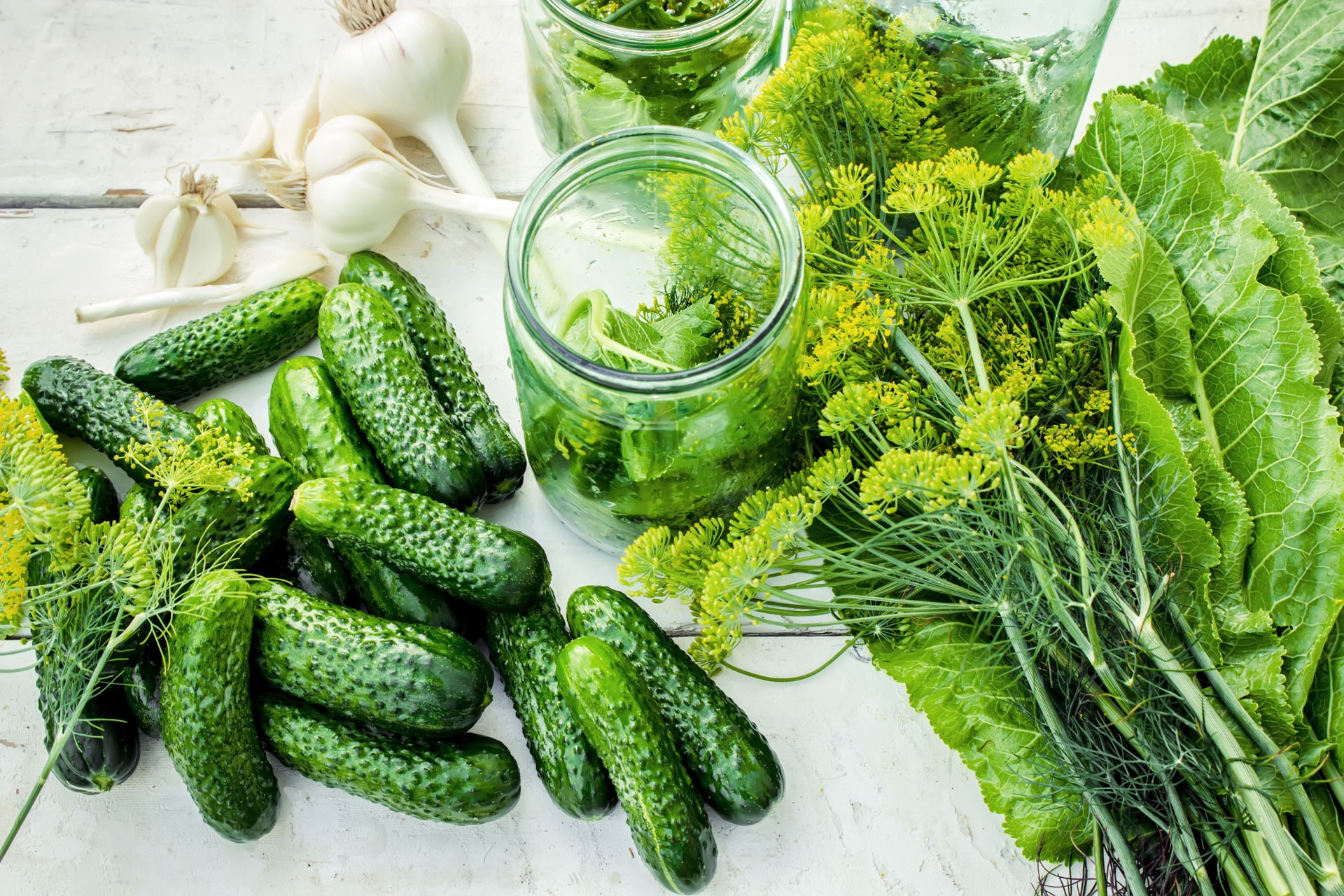 Preparation for pickling cucumbers