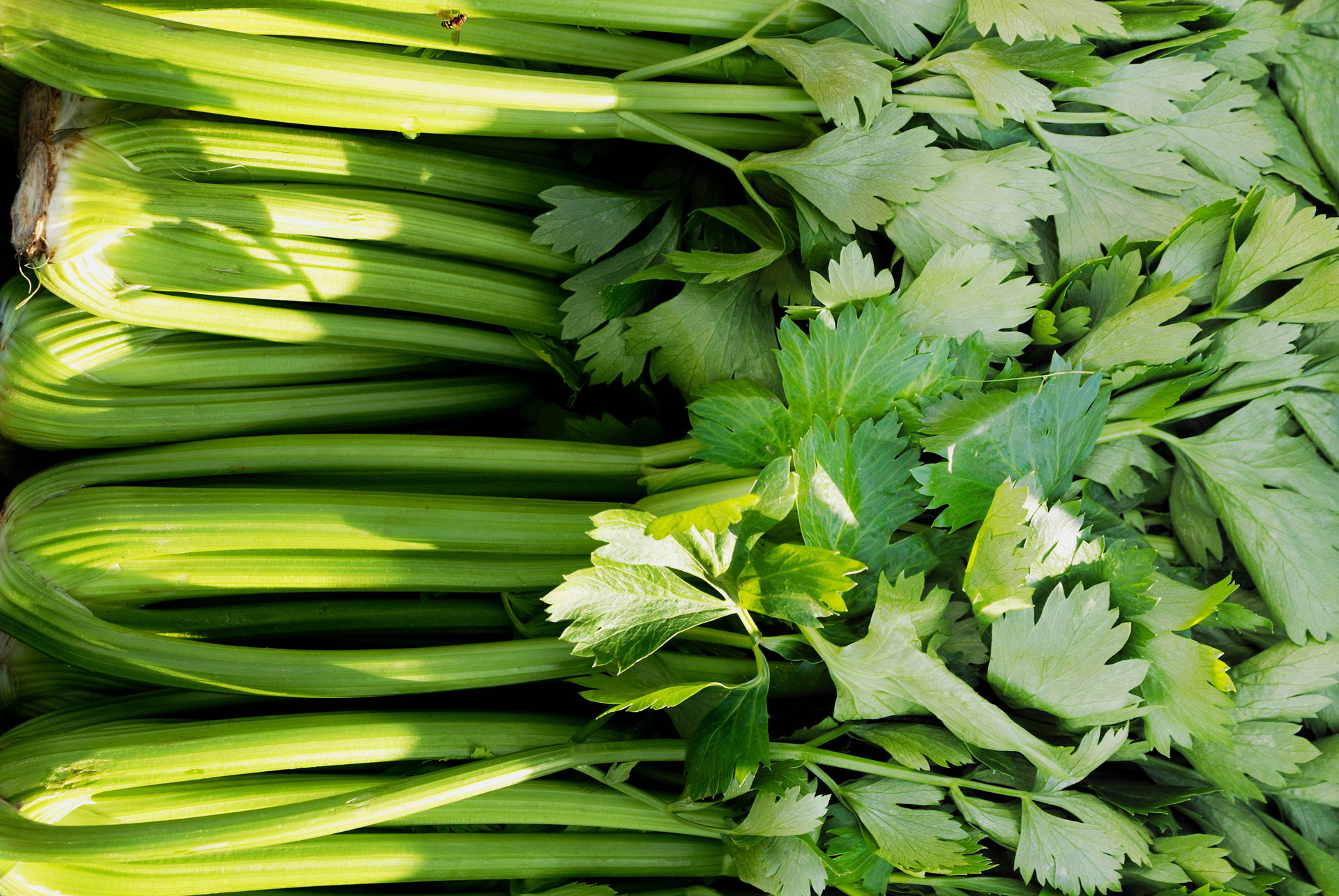 How To Use Celery Leaves Foodprint