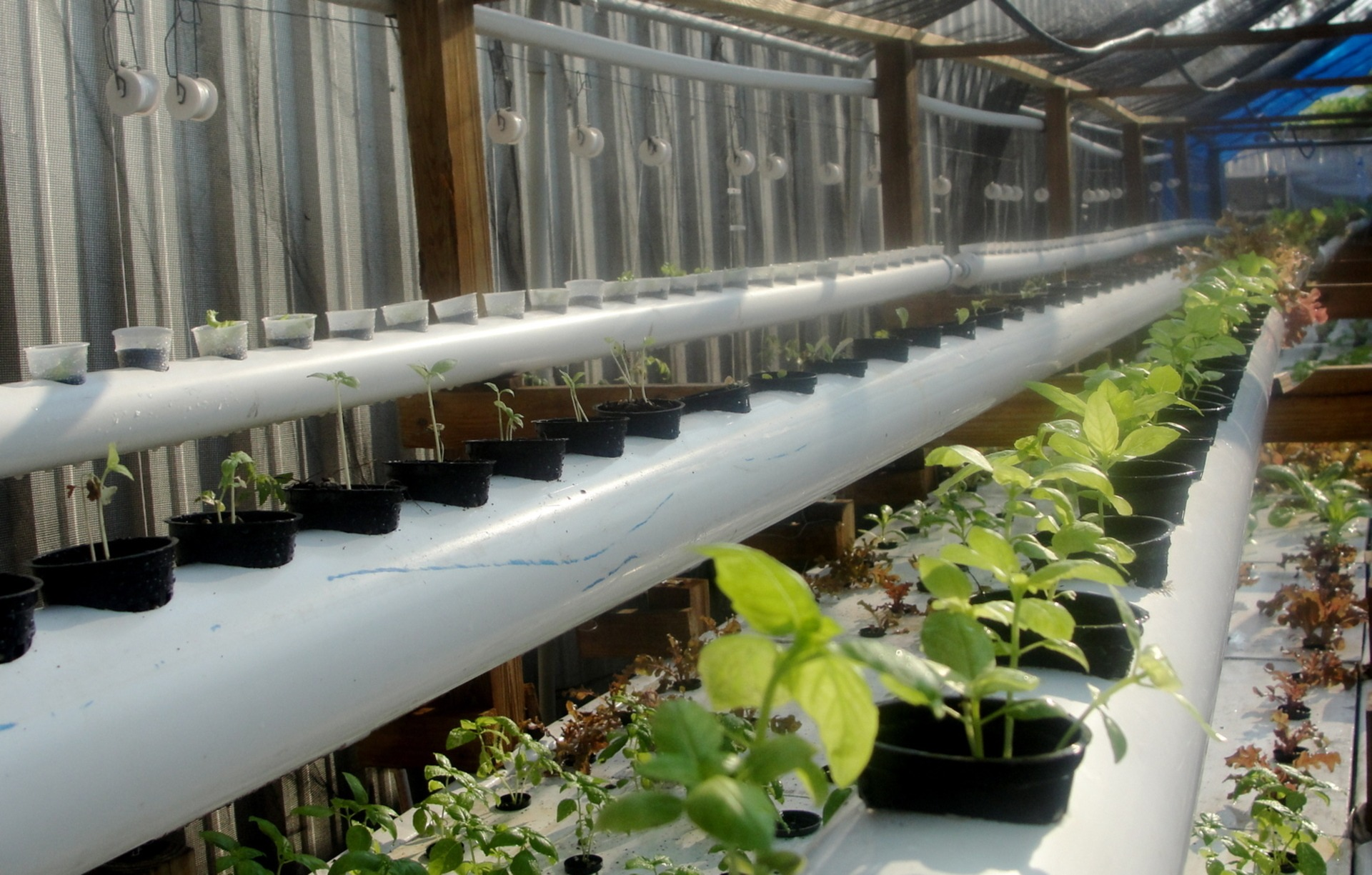Recirculating Farms, Hydroponics and Aquaponics | FoodPrint
