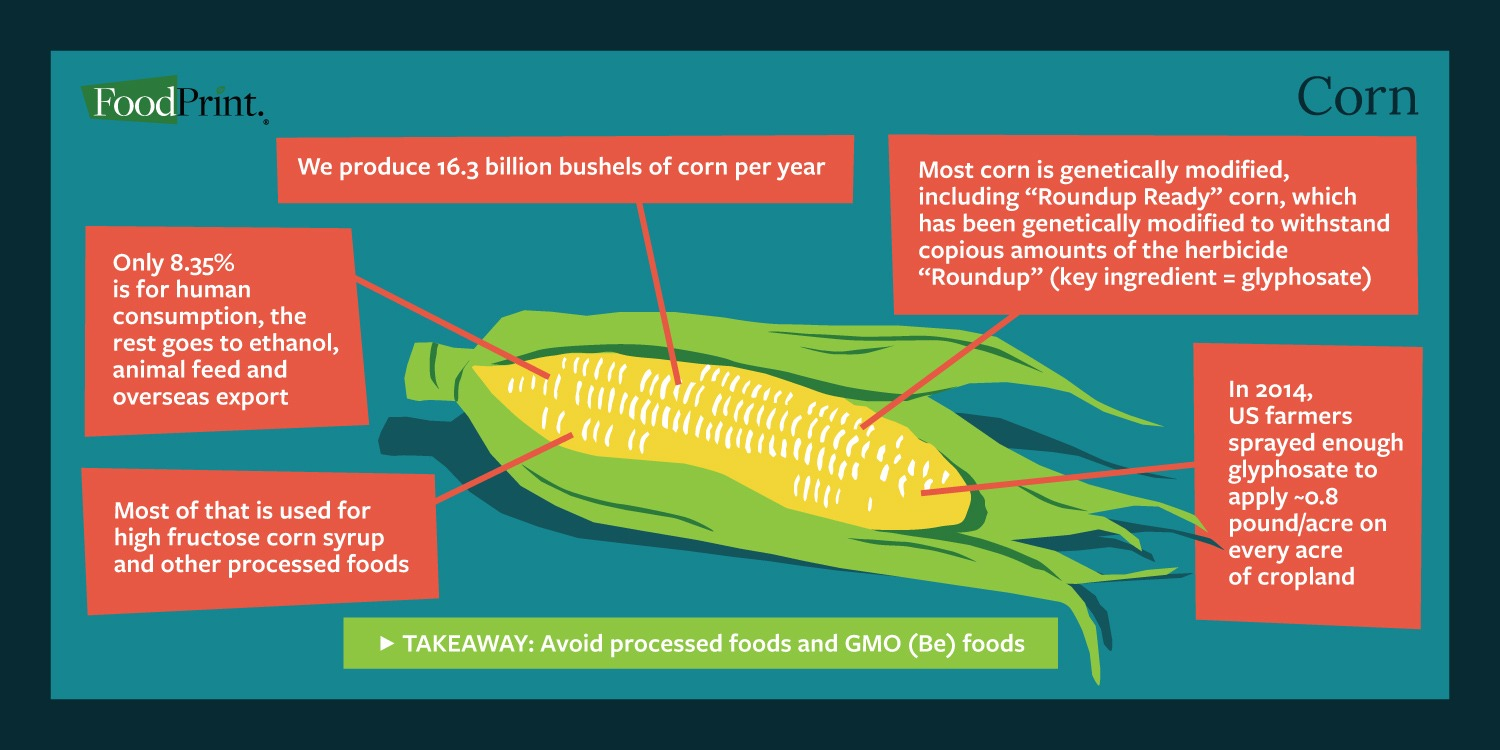Crops Infographic Corn
