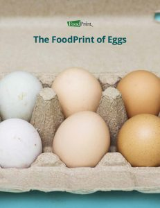 FoodPrint of Eggs Report - PDF Version