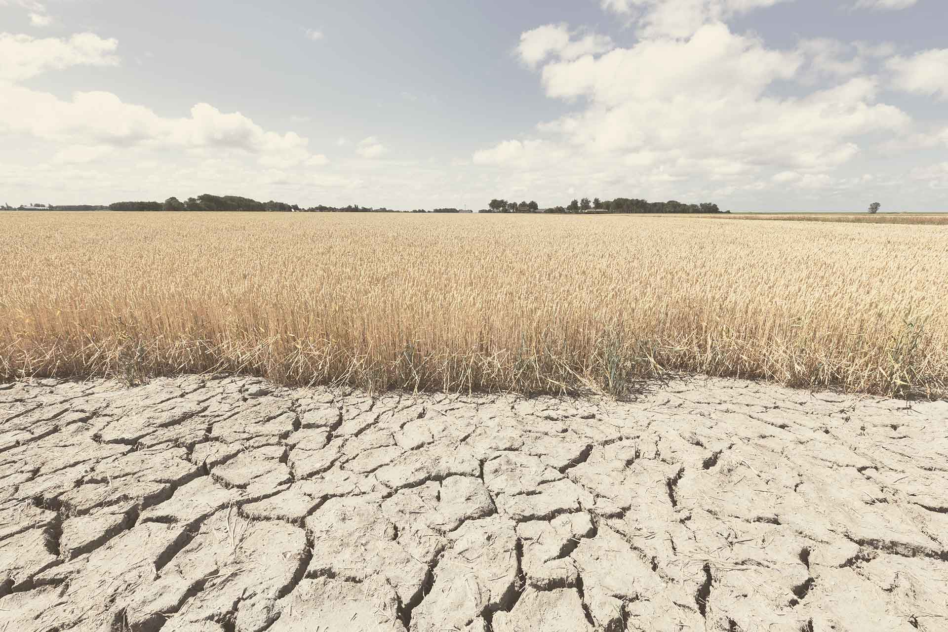 dry soil in a field