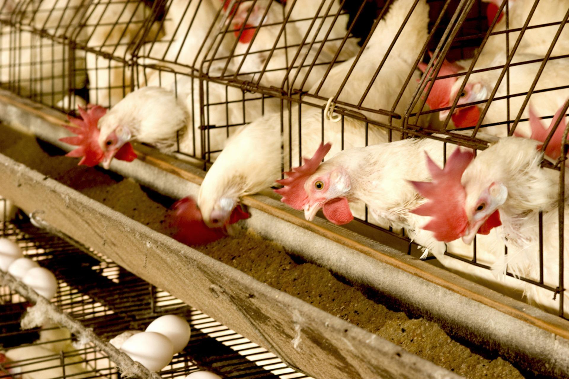 Animal Feed | FoodPrint