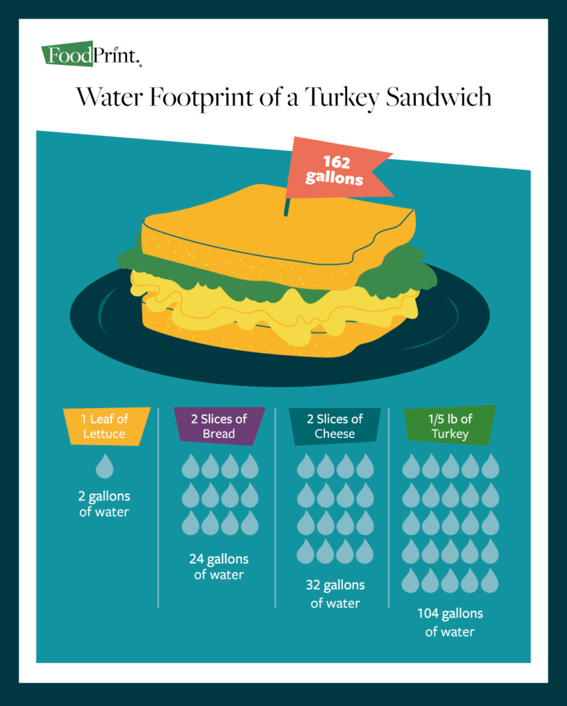 The Water Footprint of Food Infographic