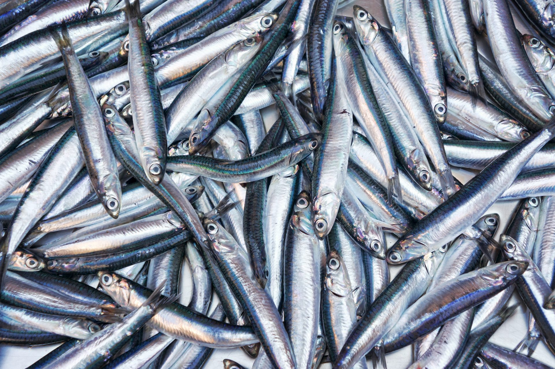 Fresh anchovies fish from Mediterranean sea