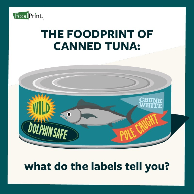 canned tuna graphic label