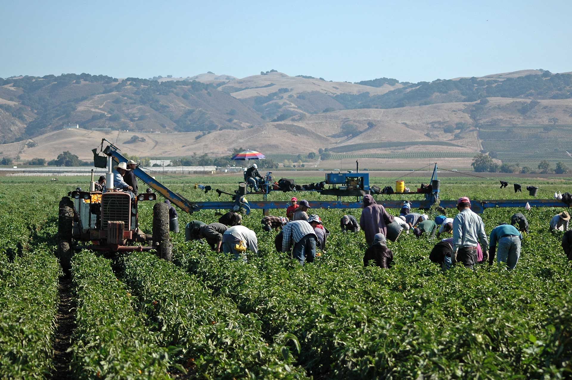issues-in-Food-Production Social Justice Workers in Field