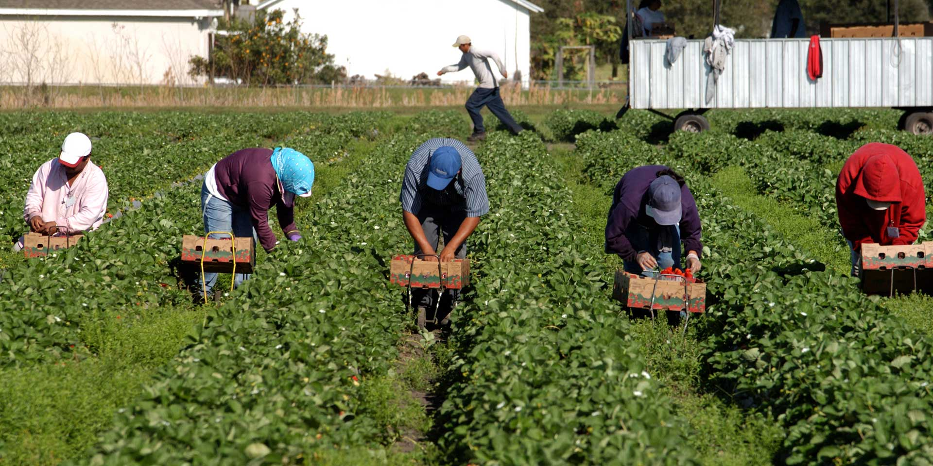 farmworkers in the field