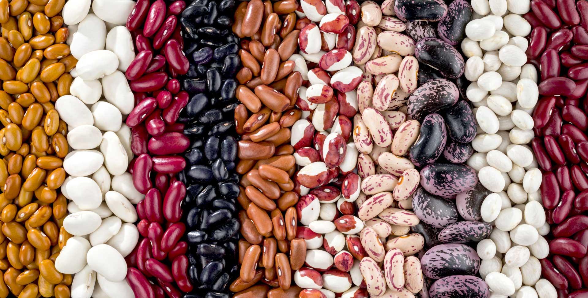 an assortment of beans