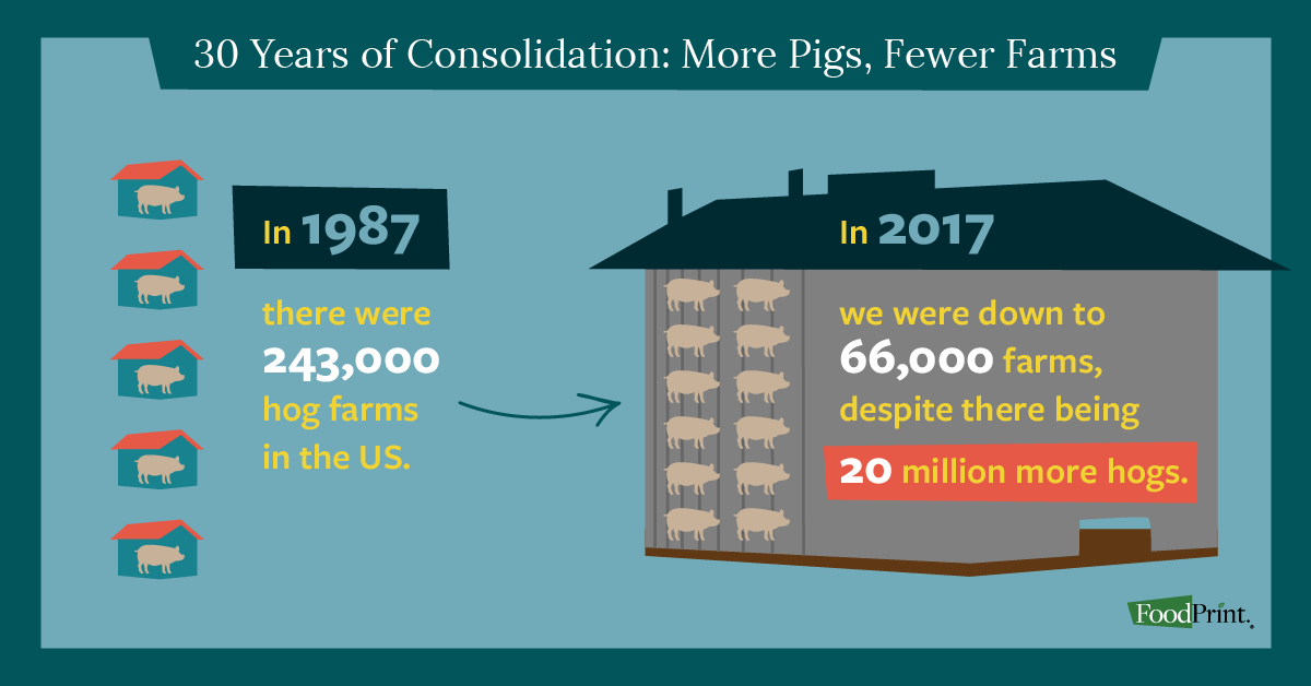 pork industry consolidation
