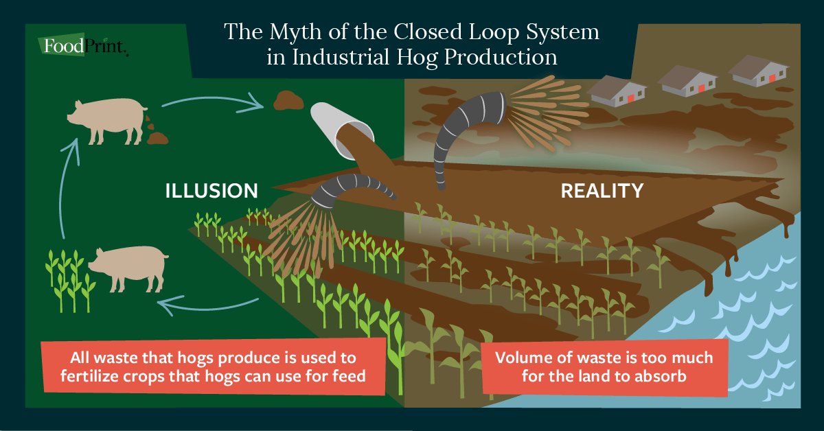 myth of a closed loop pork system