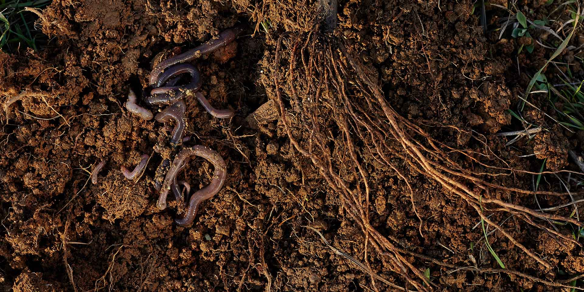 the correlation of the soil microbiome and the gut microbiome